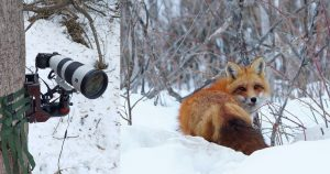 This 'Ultimate' Camera Trap Features a Sony 200-600mm Lens