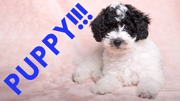 Celebrate National Puppy Day with These Fun Furry Photo Tips (VIDEO)