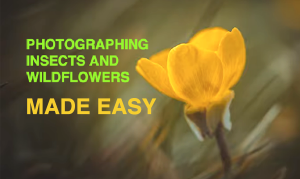 Improve Your Insect & Wildflower Photography with These Simple Tips (VIDEO)