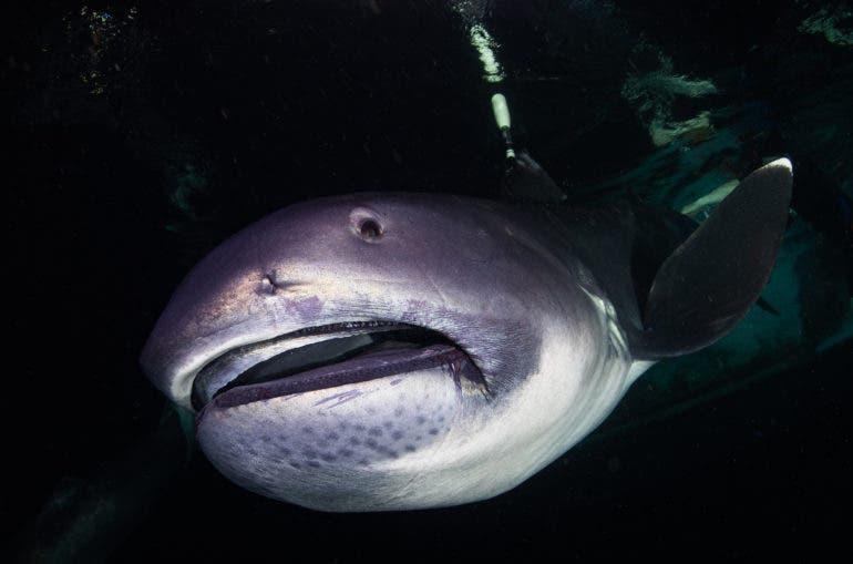 Photographer Zola Chen Captured the Ultra Rare Megamouth Shark
