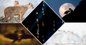WildArt Photographer of the Year 2021 'Connection' Category Winners