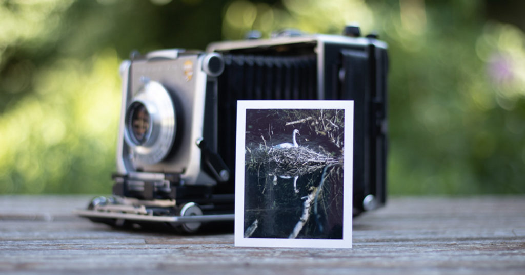 Photographing Wildlife with a Large Format Camera and Expired Film