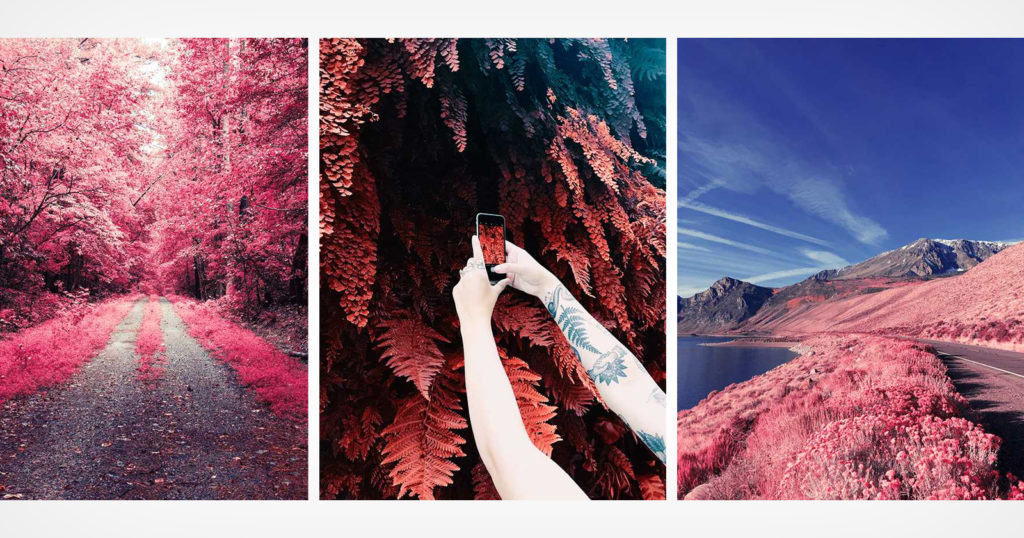 VSCO Launches New Set of Filters that Simulate Infrared Photography