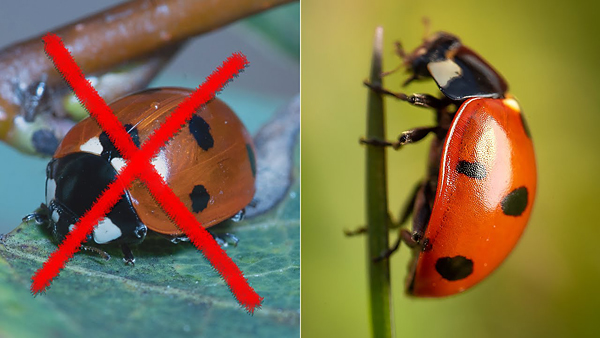 Macro Photography Mistakes to Avoid for Better Photographs (VIDEO)