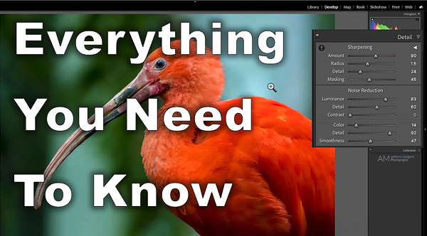 The ULTIMATE Guide to Sharpening & Noise Reduction in Lightroom (VIDEO)