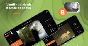The Largest Camera Trap Wildlife Study is Now a Free Mobile Game