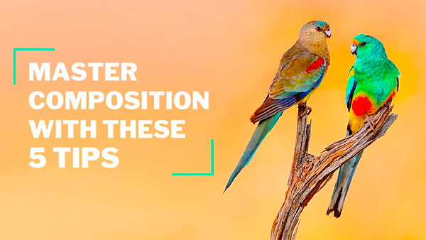 Shoot Better Bird Photos with These 5 Framing Tips (VIDEO)