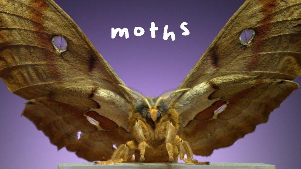 Calming 6,000 FPS Footage of 7 Stunningly Beautiful Moth Species