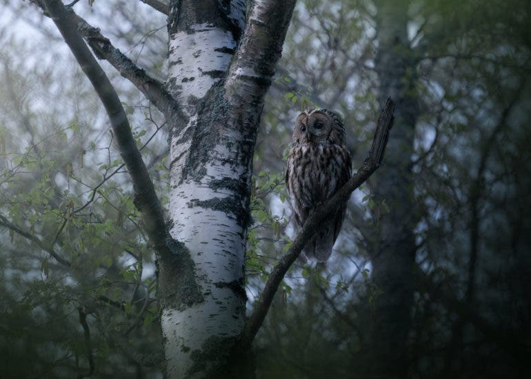 Olle Nilsson Photographs Nature in a Cinematic way