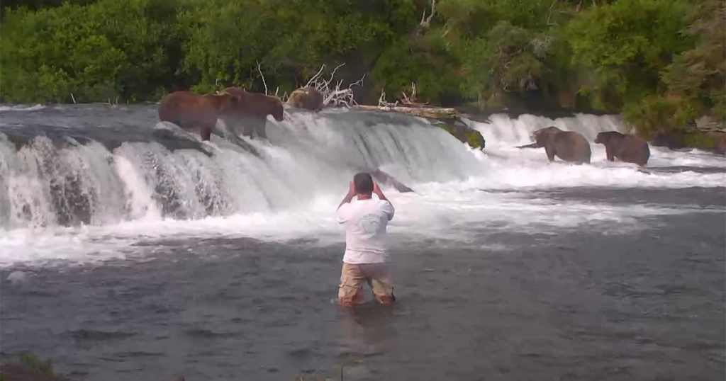 Man Busted Getting Into Water with Grizzlies for Photos