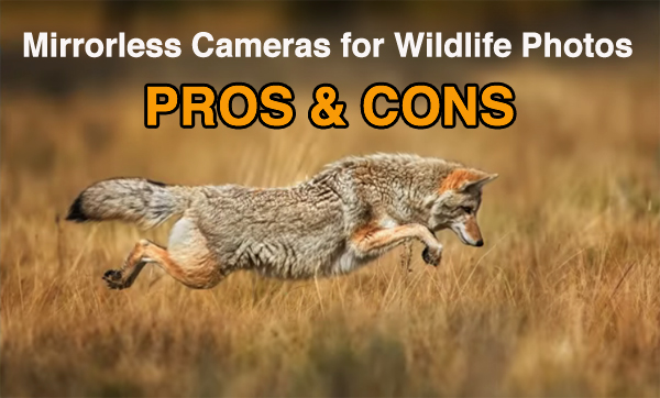 Are Mirrorless Cameras the Best Choice for Wildlife Photography? (VIDEO)