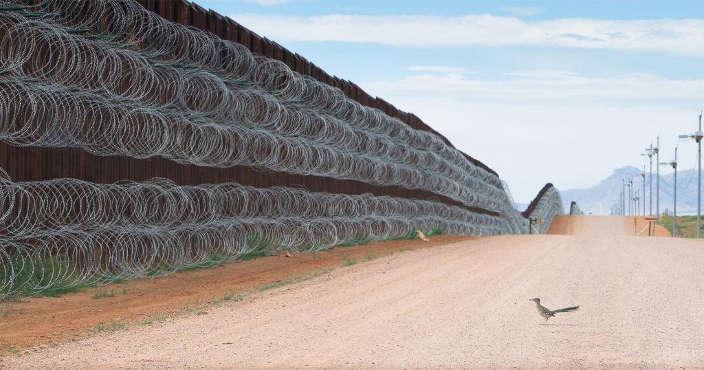 Roadrunner Blocked by U.S. Border Wall Wins Best Bird Photo of 2021