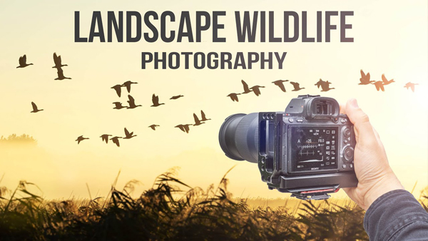 Give Landscape Photos Some Spice by Including Wildlife in Your Shot (VIDEO)