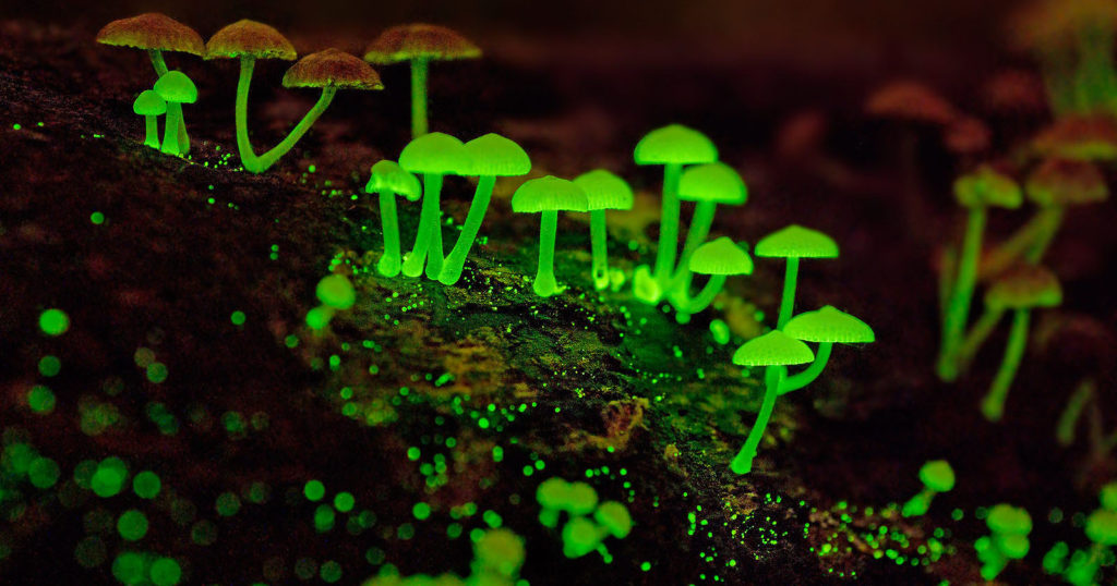 Photographing Glowing Mushrooms in Singapore