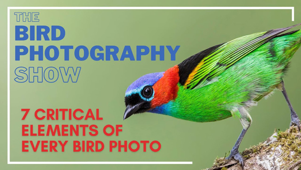 """Want Amazing Bird Photos? These Pros Reveal 7 """"Essential"""" Techniques (VIDEO)"""