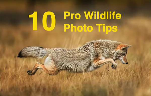 10 Pro Tips Every Wildlife Photographer Should Know